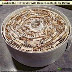 Remedies Harvesting and Using Dandelion Roots – Wildcrafting Wednesday - Harvesting and Using Dandelion Roots - Learn about the best time to dig dandelion roots, preserving dandelion roots, and dandelion root home remedies. Healing Herbs, Medicinal Herbs, Natural Medicine, Herbal Medicine, Dandelion Recipes, Dandelion Uses, Edible Wild Plants, Herbs For Health, Dehydrated Food
