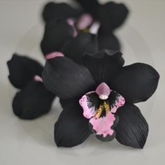 Dark Flowers, Unusual Flowers, Amazing Flowers, Beautiful Flowers, Orchids Garden, Orchid Plants, Orchid Cactus, Orchid Flowers, Orchid Flower Arrangements