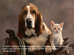 25 Inspiring Quotes For People Who LoveAnimals-use some of these for my cat and dog pictures and projects