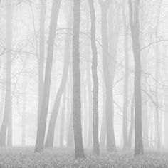 Morning Mists II Photographic Print by Doug Chinnery at AllPosters.com