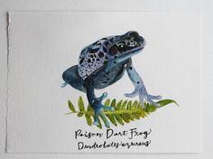 Poison Dart Frog Original Watercolor