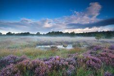 Mist in de ochtendgloren. Het Fochteloërveen is een 2500 ha groot natuurgebied op de grens van de Nederlandse provincies Friesland en Drenthe, bij het dorp Veenhuizen. Het geldt als één van de weinige en best bewaarde hoogveengebieden in Nederland.
