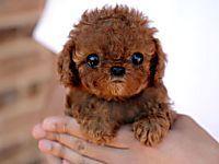 Le razze canine più belle al mondo, (il numero 8 è adorabile) Scopri le foto