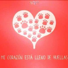 La huella que nuestras queridas mascotas dejan en nuestro corazón son…