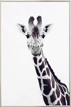 Giraffe als Poster im Alurahmen von Monika Strigel | JUNIQE