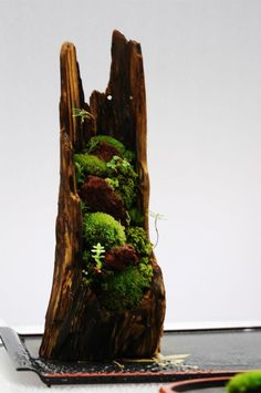 Mountain- love the combination of wood and plants to make something look like what you would see in a Japanese painting. - DIY Fairy Gardens