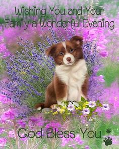 Night Time, Good Night, Childrens Dentist, Good Evening Greetings, Good Afternoon, Pet Names, Puppy Love, Life Lessons, Positive Quotes