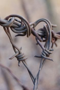 Look at this photo. I see a heart surrounded with barbs.if not it will hurt you.so please handle my heart carefully. I Love Heart, With All My Heart, Happy Heart, Love Is All, Heart In Nature, Heart Art, Barbed Wire, Foto Art, Wire Art