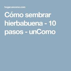 Cómo sembrar hierbabuena - 10 pasos - unComo