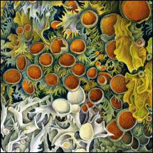 Lichen detail - Susannah Blaxill