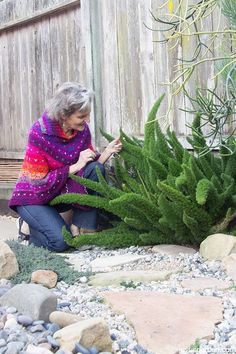 An Easy Care & Fun Plant: Myers Or Foxtail Fern. Foxtail Fern, or Myers Fern, is an artsy plant with a sculptural feel.  Foxtail Ferns are easy as can be to care for; plus, they're tough as nails.  See what they need. #ferns #gardening #gardeningtips