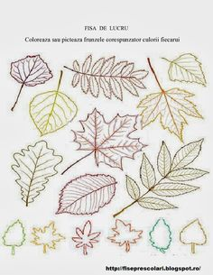 Frunze de toamna de colorat - 20   Fise de lucru - gradinita