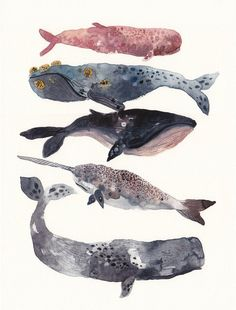 Five Whales Stacked - Large Archival Print. $40