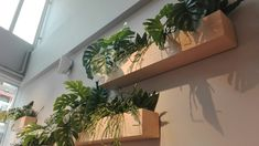 Creative Wall Decor, Creative Walls, Urban Nature, Atrium, Potted Plants, Room Inspiration, House Plants, New Homes, Home And Garden