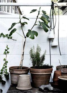 garden inspiration on ergenstussenin.be