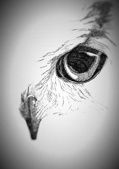 Ox Tattoo, Owl Eye Tattoo, Owl Tattoo Drawings, Totem Tattoo, Native Tattoos, Eagle Tattoos, White Owl Tattoo, Owl Sketch, Eagle Drawing