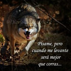 Frases Humor, Spanish Quotes, Native American Art, Teen Wolf, Animals And Pets, Cool Pictures, Qoutes, Just For You, Feelings