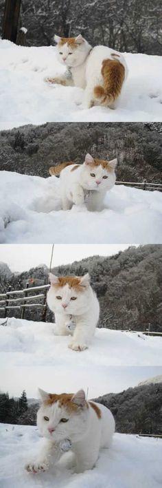 かご猫Blog 2008.12.23 雪のおさんぽ
