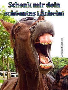 Hallo DU da.... schenk mir dein schönstes Lächeln! BIG SMILE - Da freut sich sogar das Pferd.