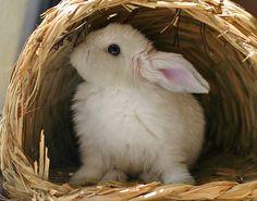 Bunny in a tunnel. Baby Bunnies, Cute Bunny, Bunny Pics, Bunny Rabbits, Hamsters, Chinchillas, Baby Animals, Cute Animals, Beautiful Rabbit