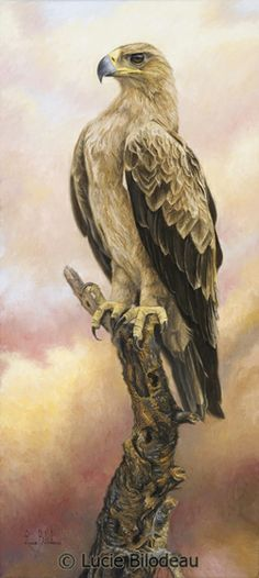 """Tawny Eagle"", oil on canvas, 24"" x 11"", by Lucie Bilodeau."