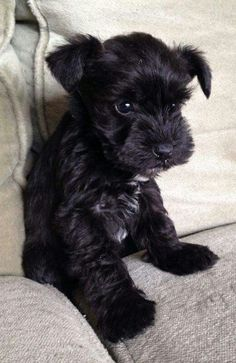 Somebody give me this dog!!!