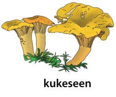 [PSV] Eesti keele põhisõnavara sõnastik Mushrooms, Animal, Animals, Mushroom, Animaux, Animales