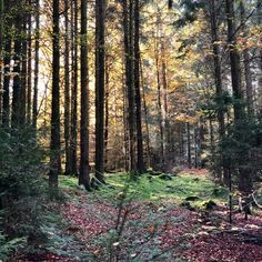 #herbst #autumn #wald #forrest #holz #wood #mysterious