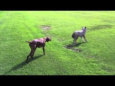 The music makes the whole video. Dogs are so awesome. <3