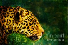 This digital artwork created by Tracey Everington of Tracey Lee Art Designs shows a close up of a jaguar in long grass with an abstract green and black background. This digital painting was created using Photoshop. Abstract Backgrounds, Black Backgrounds, Green And Black Background, Design Show, Art Blog, Jaguar, Art Designs, Grass, Photoshop