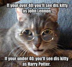 #funny #cat #harrypotter #johnlennon
