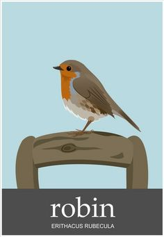 Birds of Great Britain - Little Robin Red Breast! Robin Drawing, Our National Bird, Animal Templates, Robin Bird, Bird Crafts, Bird Illustration, Bird Drawings, Pebble Painting, Bird Art