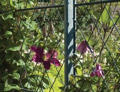 Garden trellis panels and posts – ideal privacy trellis. Diamond trellis panels to screen your garden. Metal Trellis Panels, Garden Trellis Panels, Trellis Fence, Privacy Trellis, Front Porch Landscape, Front Porch Plants, Porch Canopy Designs, Door Canopy Porch, Porch Awning