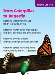 From Caterpillar to Butterfly: Science Poem