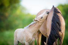 foals Liberty photo