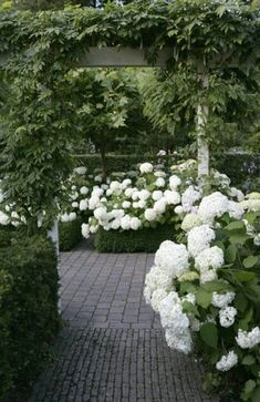 White hydrageas in a lush garden ~ Green and White Modern front yards are all natural colours. White hydrangeas against the lush greens make your front yard more vibrant. #modernyardcolour #modernyardfront