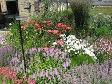 Flori superbe, rezistente la seceta, pentru o gradina colorata in zilele toride de vara