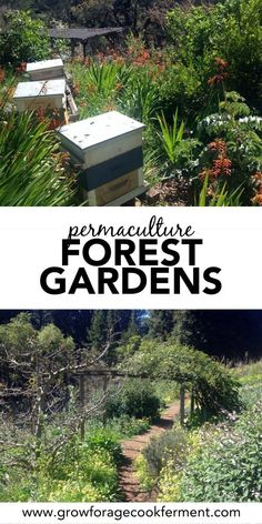 Permaculture What is a Forest Garden? Forest gardens are the best, most hands off way to grow your own food. They are beautiful too! Learn about guilds and food forests in this permaculture 101 series. Farm Gardens, Small Gardens, Outdoor Gardens, Permaculture Design, Permaculture Farming, Forest Garden, Woodland Garden, Forest Design, Grow Your Own Food