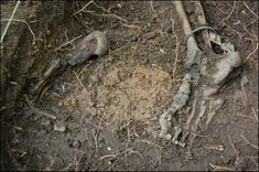 Body Farm, Forensic Anthropology, Forensic Science, Science Books, Forensics, Medicine, Google, Image, Medical