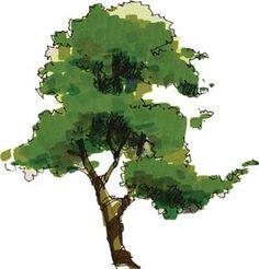 "Marker/Ink/Watercolor Tree in ""Face-Me"" format. Landscape Sketch, Landscape Drawings, Landscape Architecture, Landscape Design, Plant Sketches, Tree Sketches, Watercolor Trees, Watercolor Paintings, Plant Illustration"