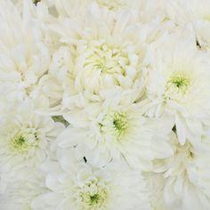 FiftyFlowers.com - Wedding White Dahlia Style Cremon Pack