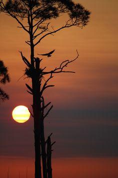 Sunrise in Pensacola near back gate of NAS~