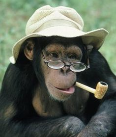 15 Best Funny Monkey Pictures You Will Laugh To See - Animal World Funny Monkey Pictures, Funny Photos, Animals And Pets, Funny Animals, Cute Animals, Animal Memes, Animals Beautiful, Mundo Animal, Tier Fotos
