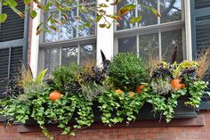 Autumn window boxes with ivy, heather, pumpkins and more!   Visit www.wisteriaandrose.com for more details.
