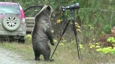 Wildlife photographer Jim Lawrence set up his camera close to the Kootenay National Park in British Columbia, Canada, and ended up getting up close and perso. Bear Paintings, Bear Drawing, Bear Photos, Bear Toy, Mammals, Have Fun, National Parks, Wildlife, Pets