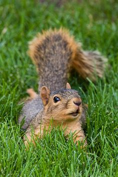 Squirrel in some lush grass