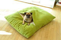 Dachshund and Pug perfect :@