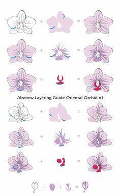 http://altenewblog.com/wp-content/uploads/2016/08/Layering-Guide-Oriental-Orchid-01.jpg