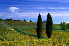 Itineraries in Tuscany:What to Do in 5 days in Tuscany,Italy