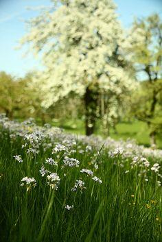 Ahhh springtime...